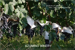 azumino-winery-8