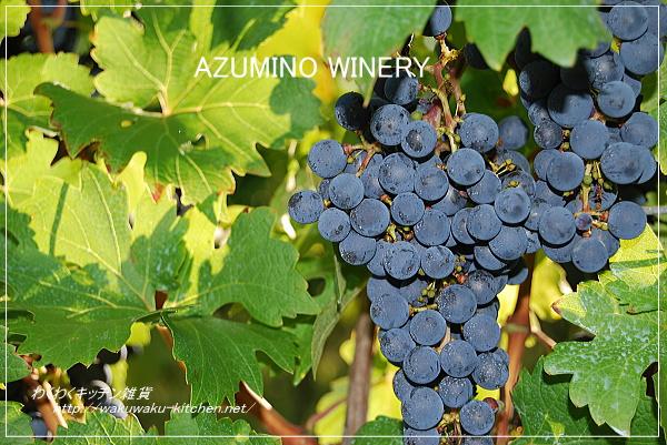 azumino-winery-9