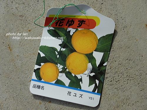 hanahiroba-yuzu-21