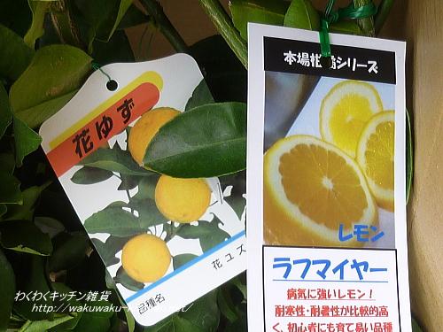 hanahiroba-yuzu-4