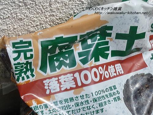 hanahiroba-yuzu-9