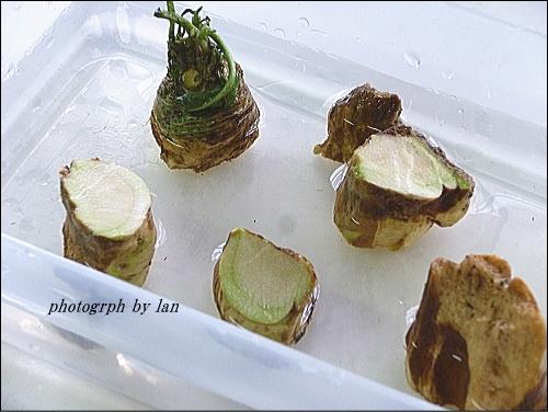 horseradish-2